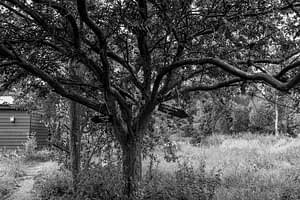 Tree and black slate signposts in the meadow