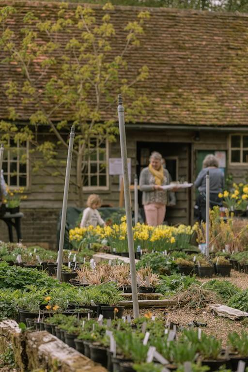 Plants at the Little Heath Farm nursery in Potten End