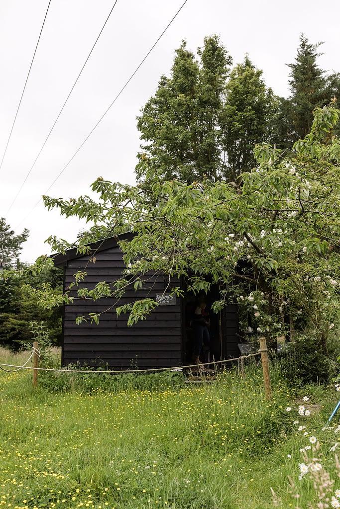 cabin in meadow