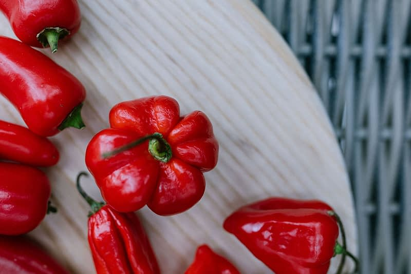 Scotch bonnets red chillies picture taken overhead