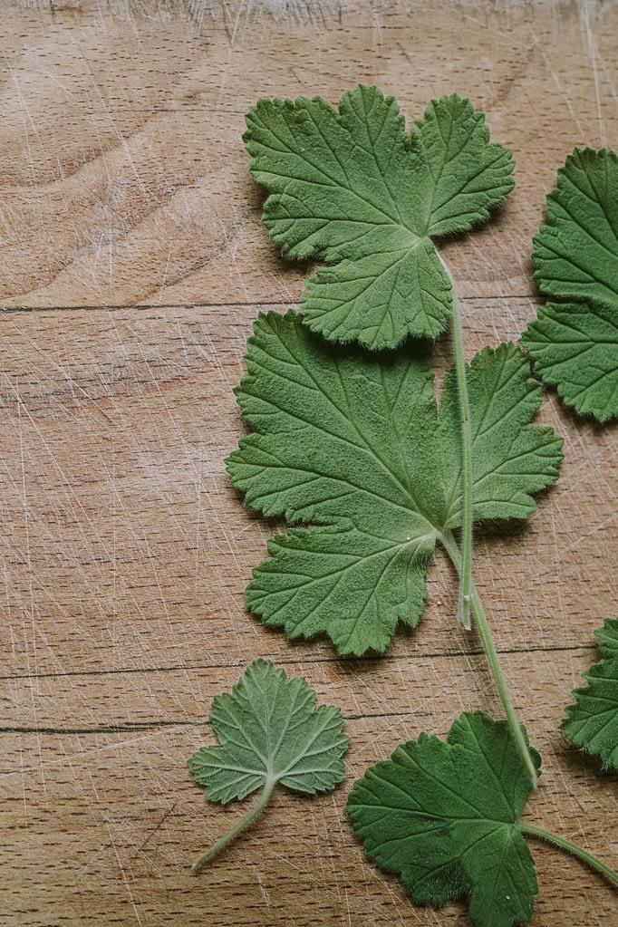 Sweet Geranium leaves on wood board